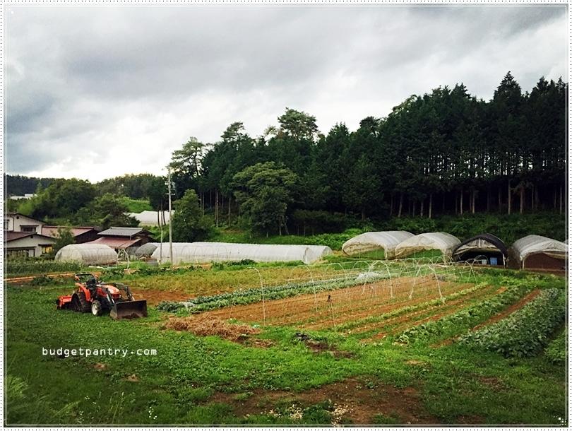Takayama farm1