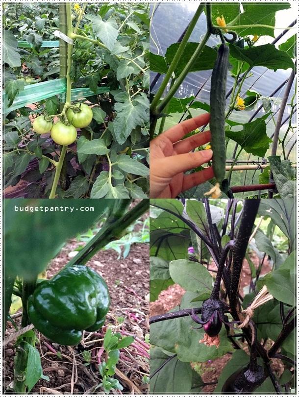 takayama farm plants